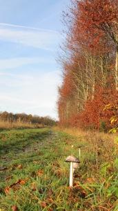 rando Saint-Ode/Morhet en automne